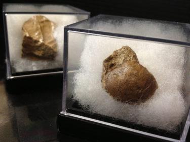 化石発掘ツアー